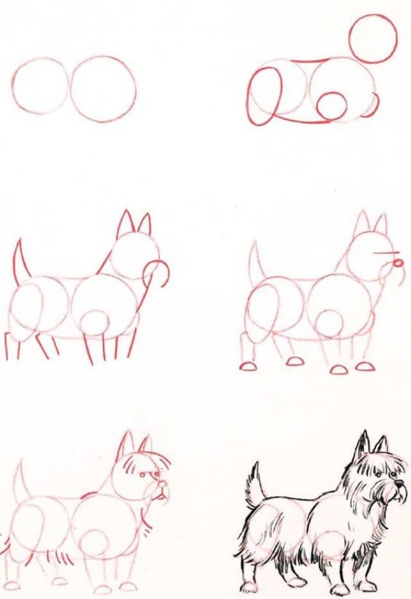 How-to-Draw-a-Dog-Step-by-Step-Dog-Drawing-Tutorials